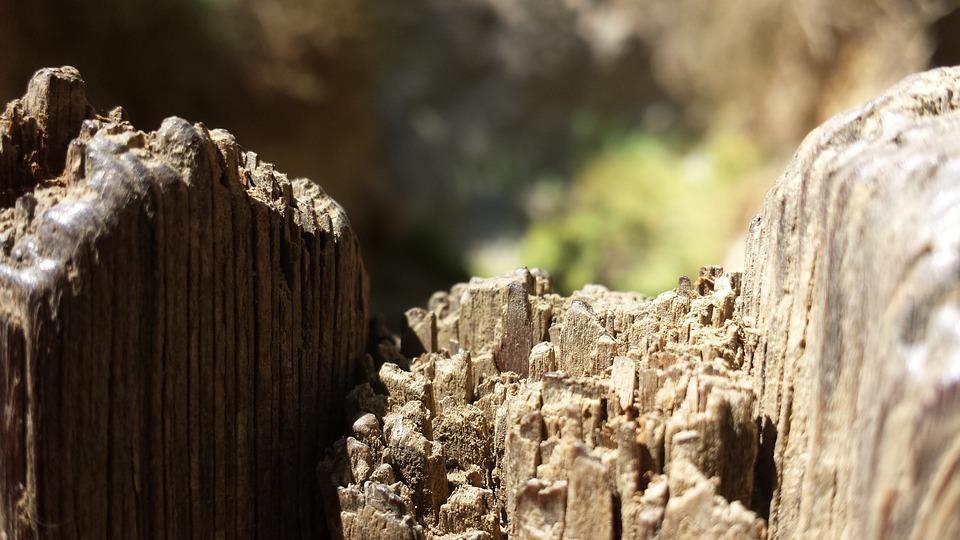 Wood, Close Up, Nature