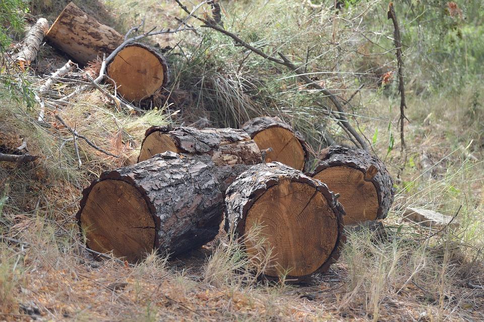 Trunks, Wood Cut, Wood, Cut Trunk, Lena, Tree Trunk