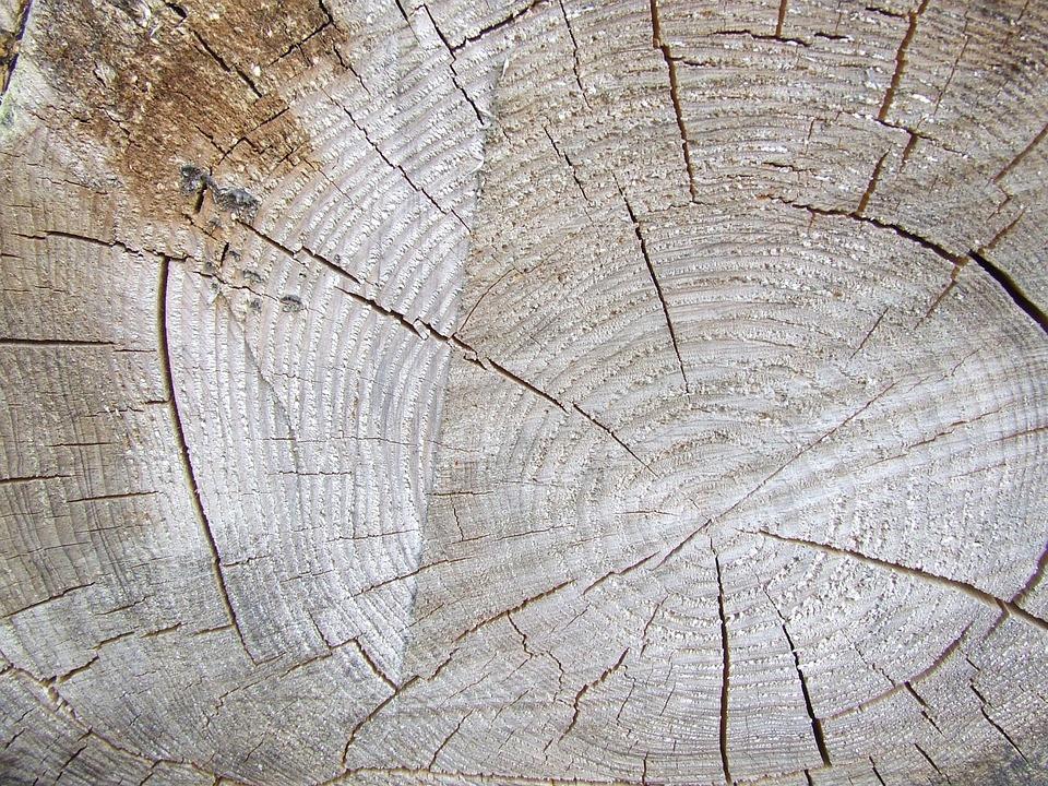 Tree, Trunk, Cut, Brown, Wood, Woodgrain, Grain, Rings