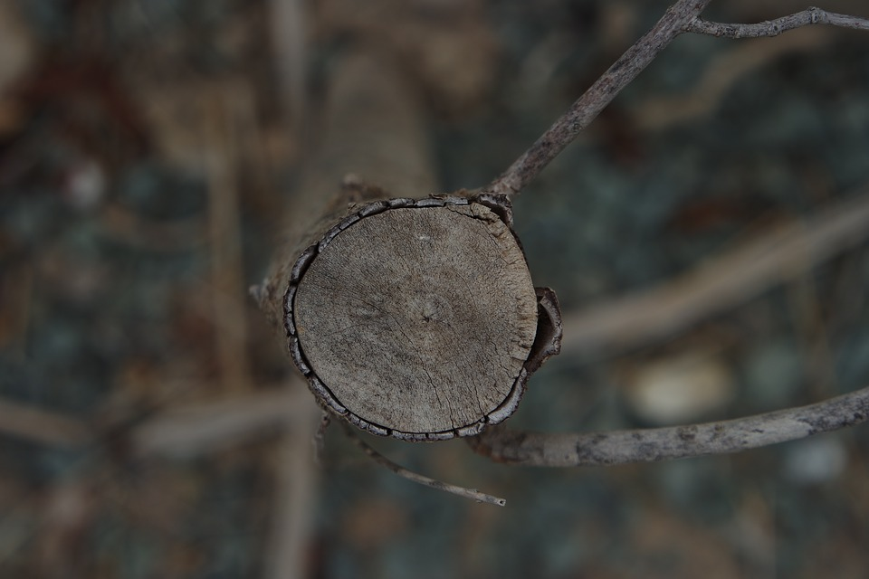 Trunk, Wood, Texture, Thicket, Cut Trunk