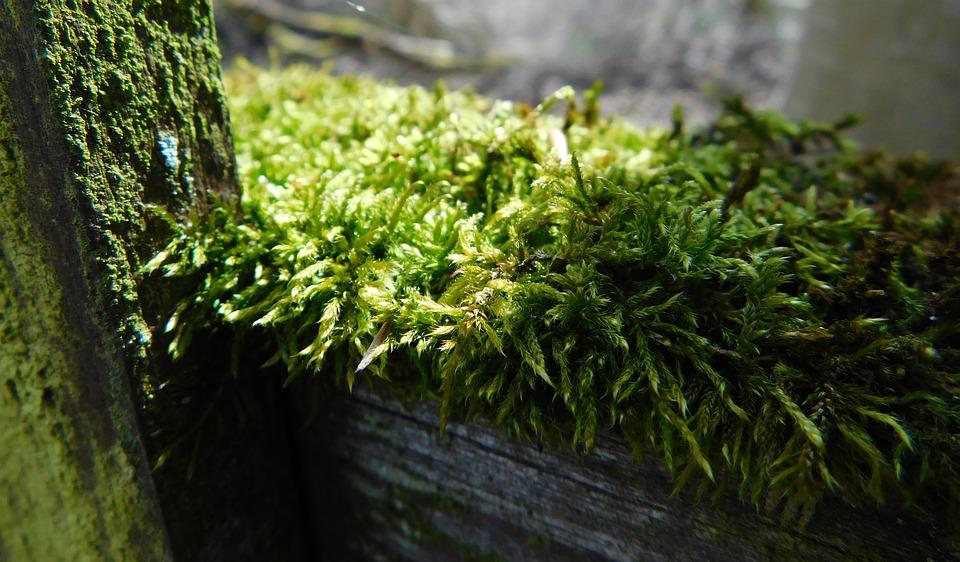Moss, Fence, Wood Fence, Old, Moosbedeckt