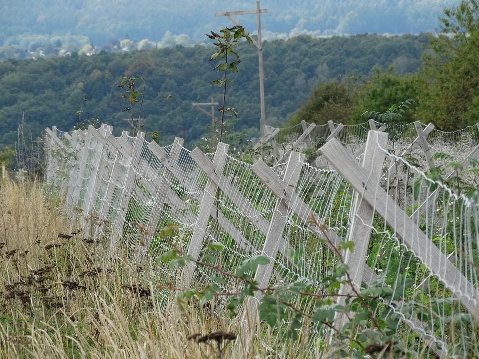 Fence, Wildlife Protection, Autumn, Nature, Wood Fence