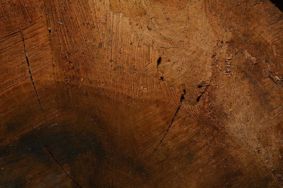 Wood, Structure, Wood Fibres, Wood Grain, Close