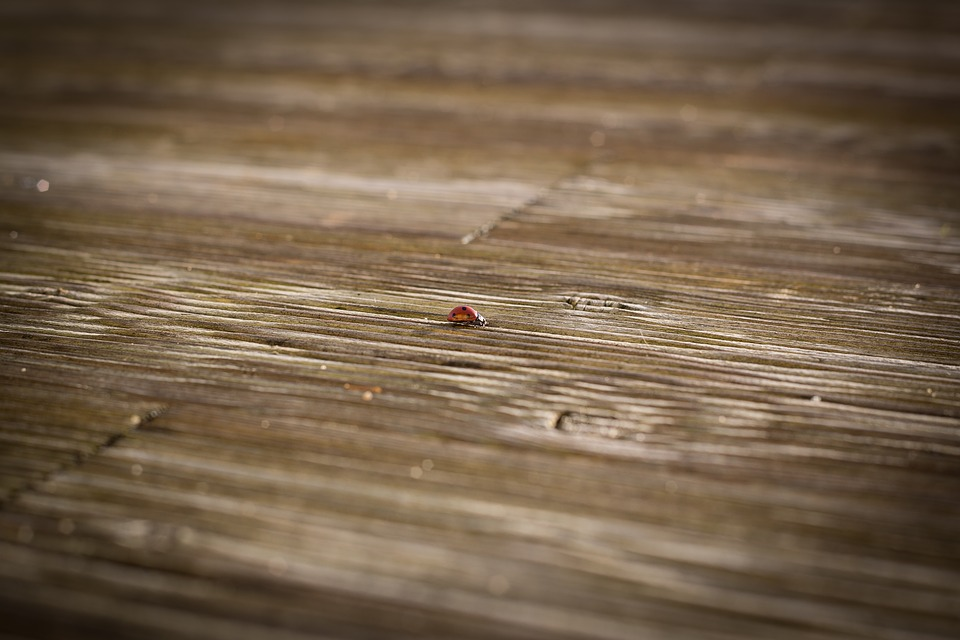 Ladybug, Terrace, Wood Floor, Lonely, Infinite Increase