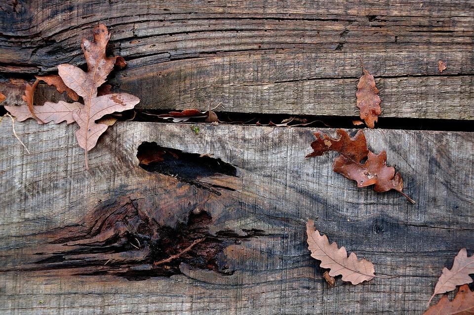 Wood, Wood Floor, Leaves, Flooring