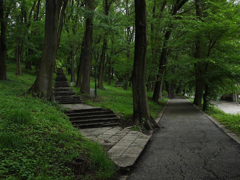 Guidance, Footpath, Wood, Tree, Road, Park, Trail, Path