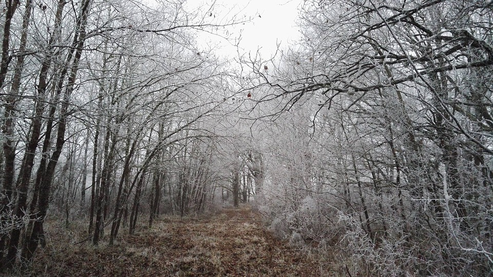 Frost, Wood, Cold, Nature, Tree, Under Wood, Landscapes