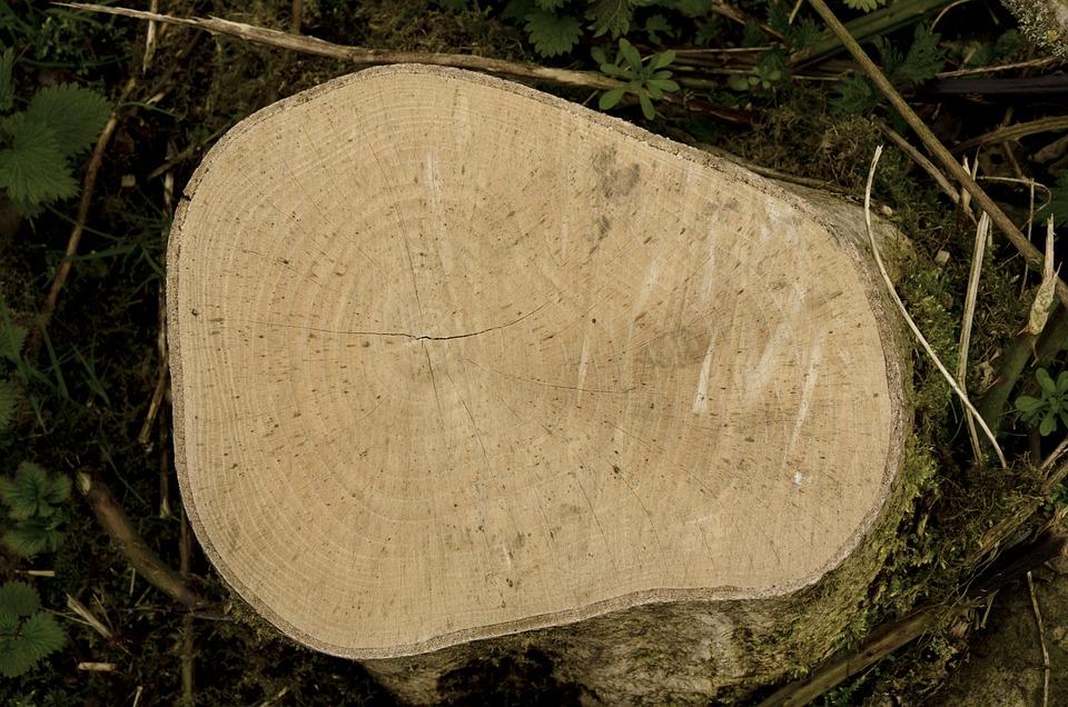 Wood, Nature, Tree, Log, Tree Log, Wood Grain, Grain