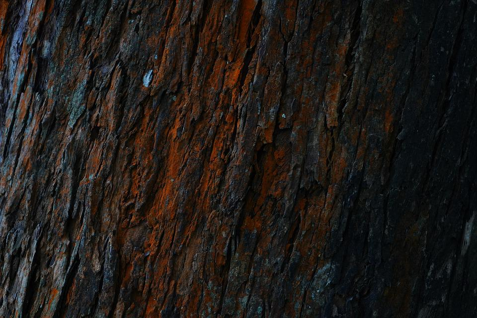 Wood Grain, Wood - Material, Timber, Natural Condition