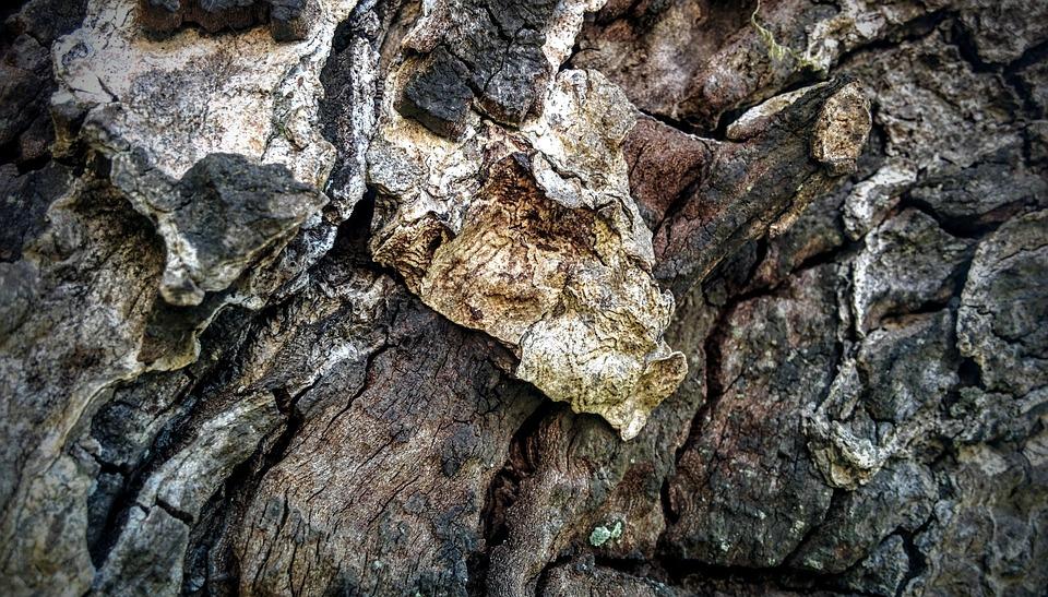 Wood, Texture, Pattern, Wood Grain, Grain, Wood Texture