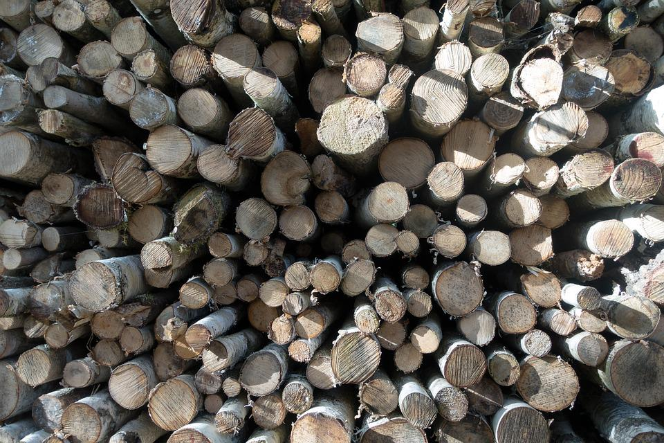 Wood, Birch, Firewood, Holzstapel, Growing Stock