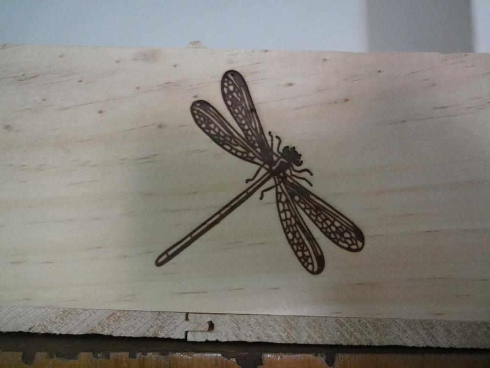 Drawing, Insect, Dragonfly, Wood