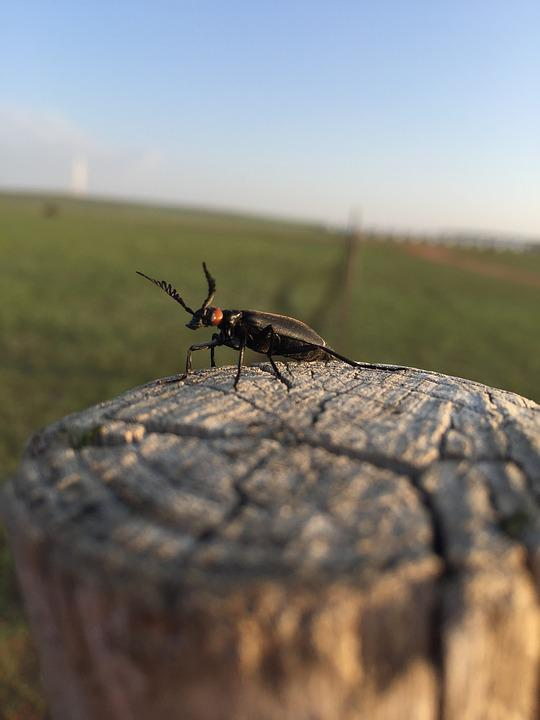 Insect, Prairie, Wood
