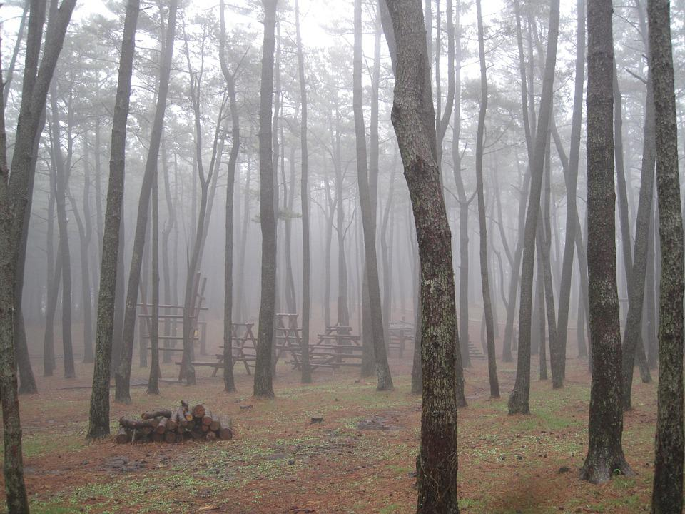 Jeju Island, Forest, Wood