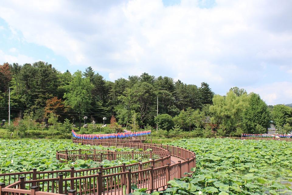 Nature, Plants, Wood, Summer, Garden, Kite, Outdoor