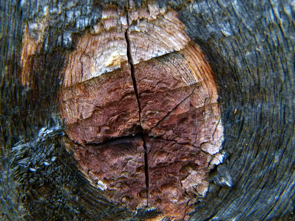 Wood, Tree, Knothole, Nature, Dry, Brown, Tree Ring