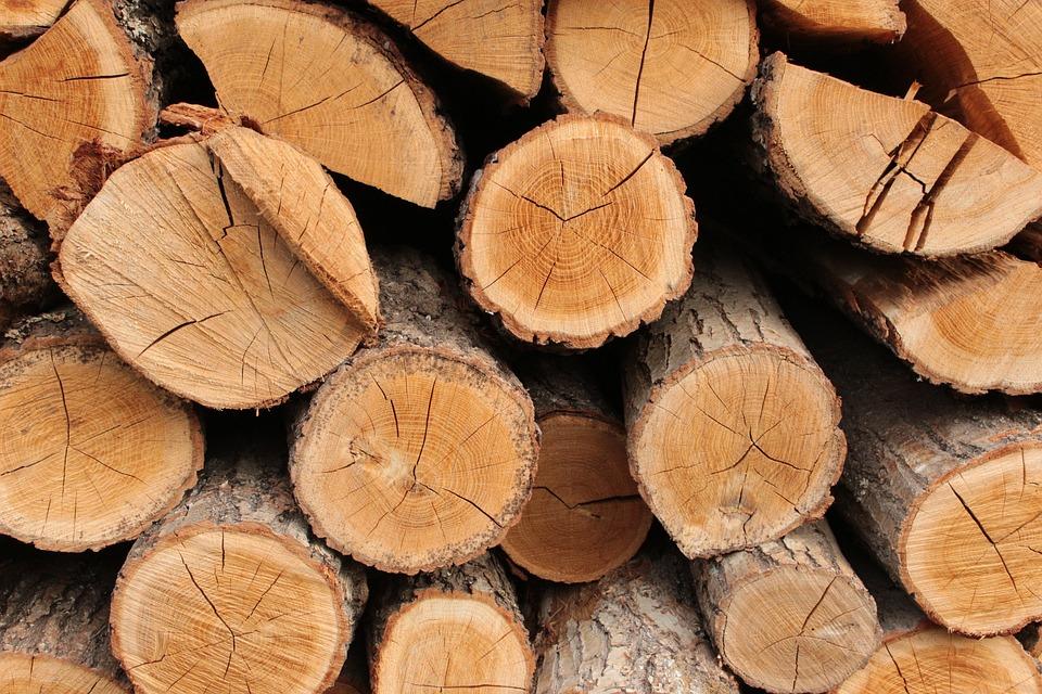 Wood, Trunk, Konary