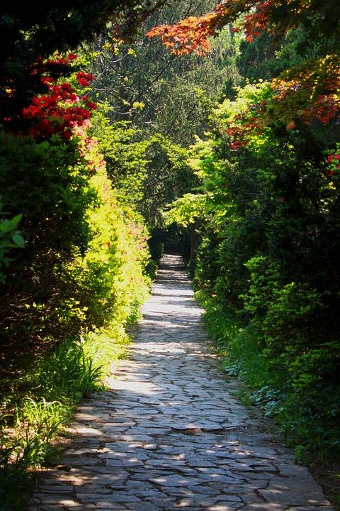 Landscape, Nature, A Flower Garden, Gil, Flowers, Wood