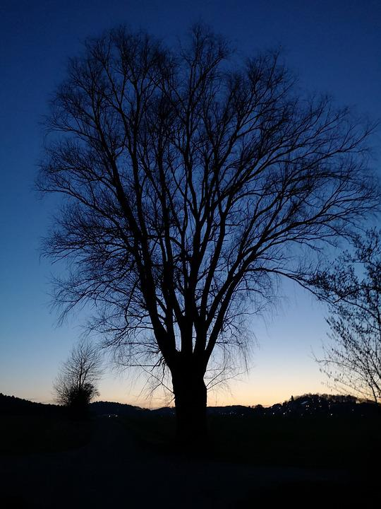 Tree, Landscape, Nature, Wood