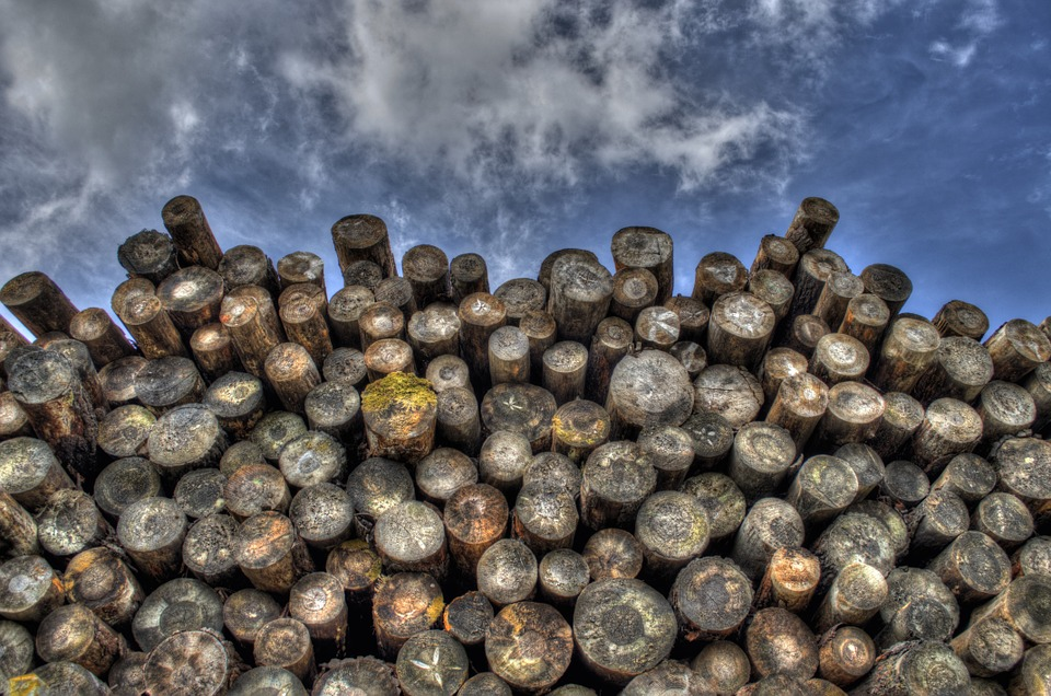 Logs, Wood, Timber, Lumber, Woodpile, Forestry, Logging