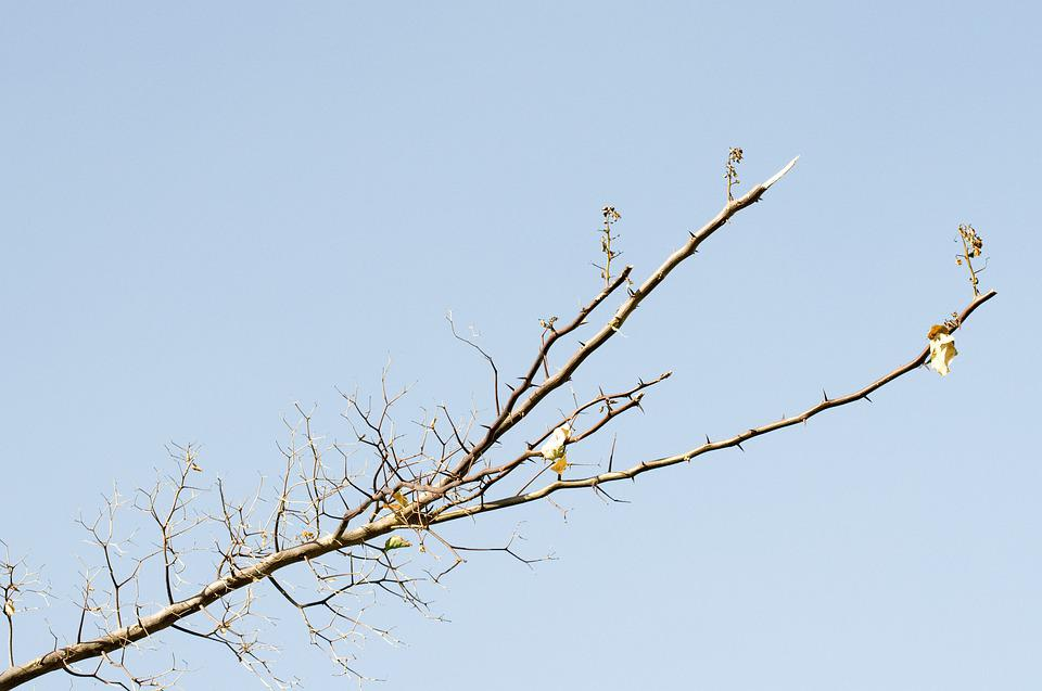 Sky, Branch, Nature, Tree, Spring, Wood, Growing, Blue