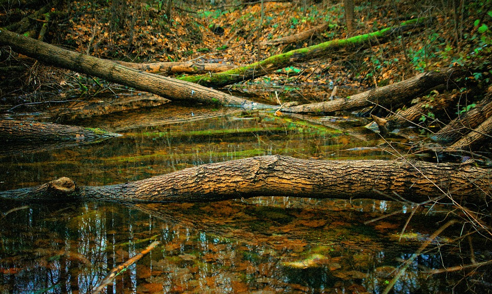 Broken Trees, Wood, Stack, Tree, Trunk, Nature, Forest