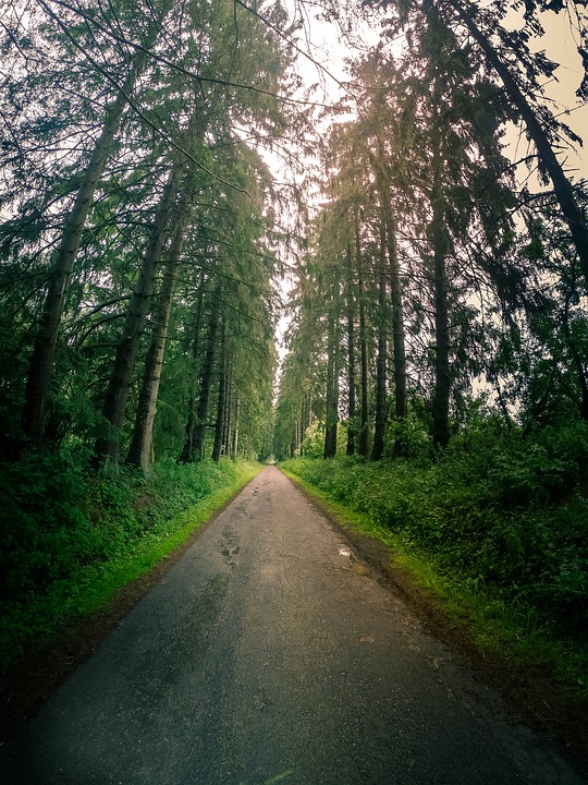 Forest, Vertical, Landscape, Nature, Trees, Green, Wood