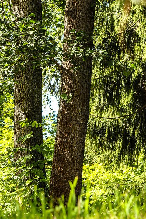 Nature, Wood, Landscape