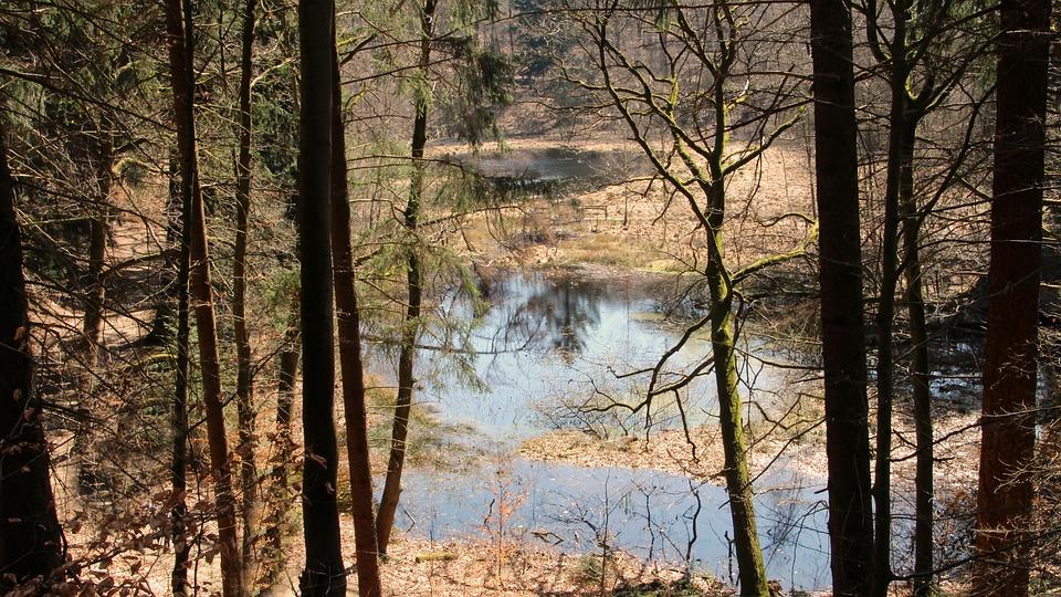 Lake, Tree, Wood, Landscape, Nature