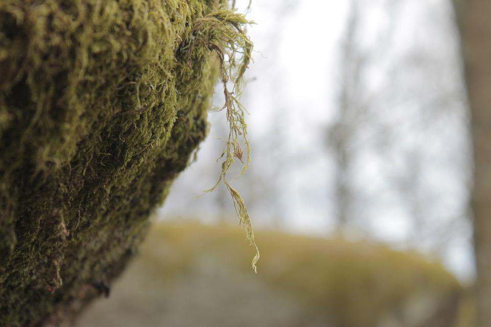Nature, Tree, Environment, Plant, Wood, Moss