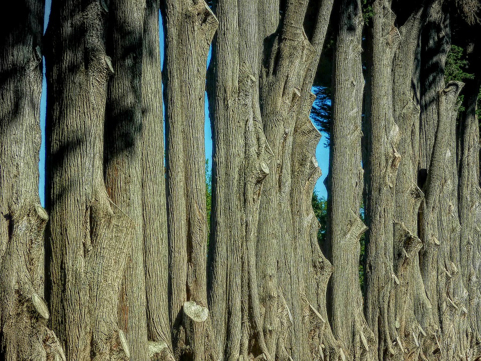 Desktop, Old, Tree, Wood, Nature