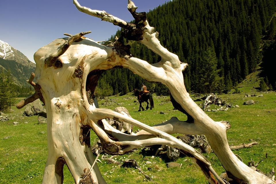 Root, Reiter, Nature, Wood