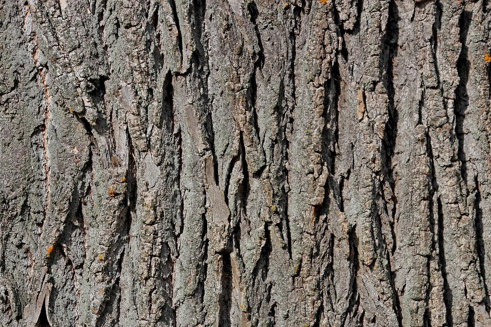 Tree Bark, Tree, Bark, Wood, Structure, Nature, Log