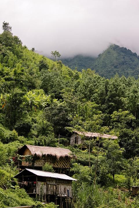 Nature, Wood, Tree, Outdoors, Travel, Mountain, Green