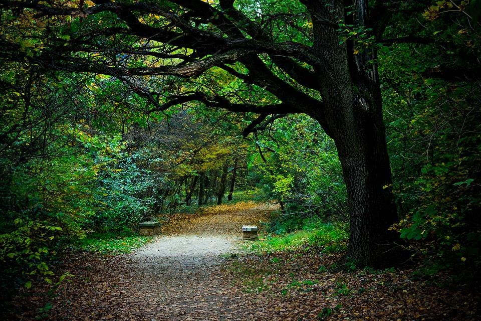 Walk, Road, Forest, Wood, Autumn, Nature, Still Life