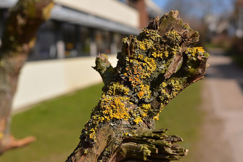 Branch, Wood, Moss, Yellowish, Old