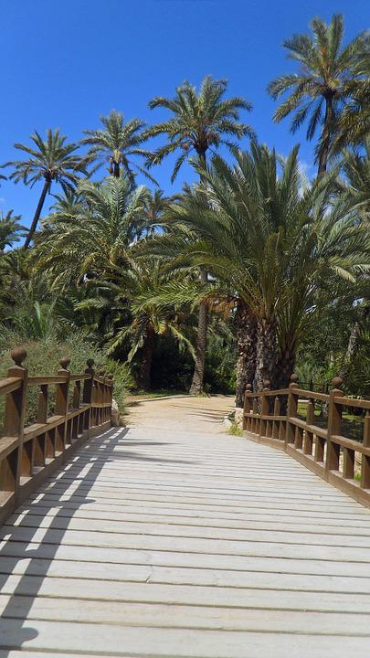Palm Trees, Bridge, Spain, Summer, Wood, Holiday