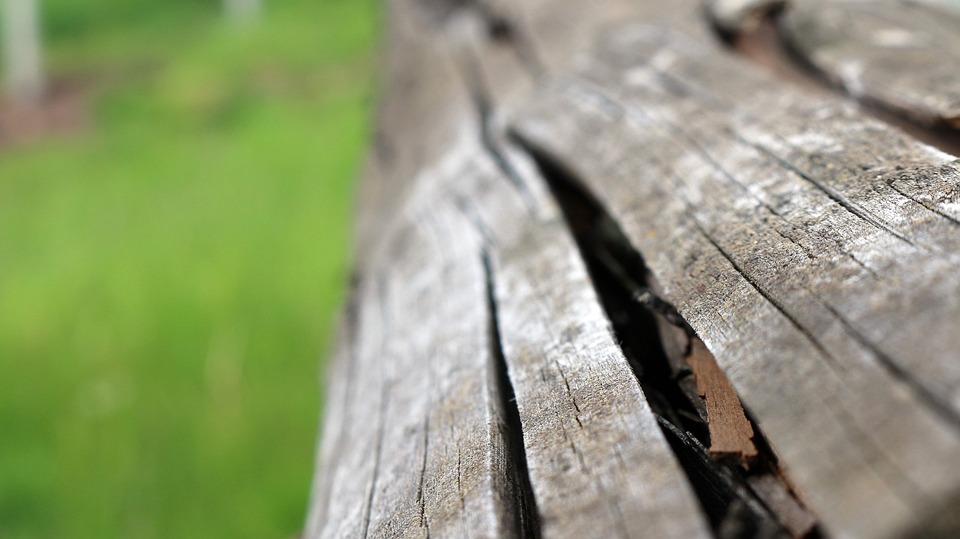 Wood, Park, Macro, Details, Braun, Botany, Green