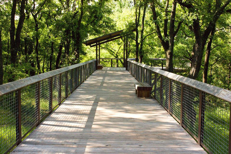 Bridge, Nature, Landscape, Forest, Park, Outdoor, Wood