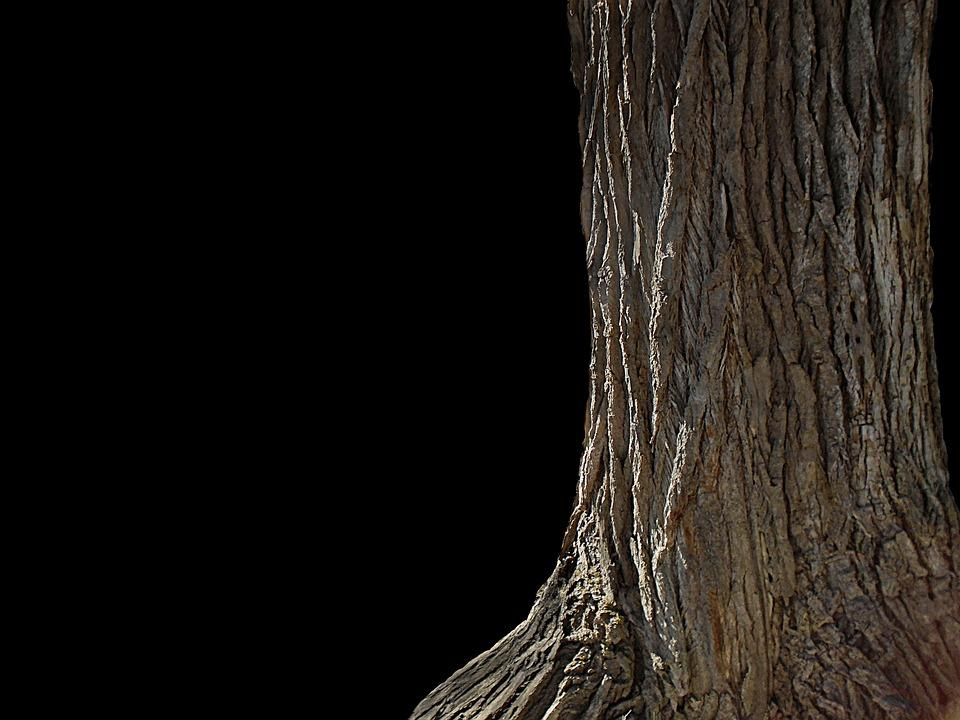 Tree, Nature, Wood, Texture, Surface, Pattern, Rough