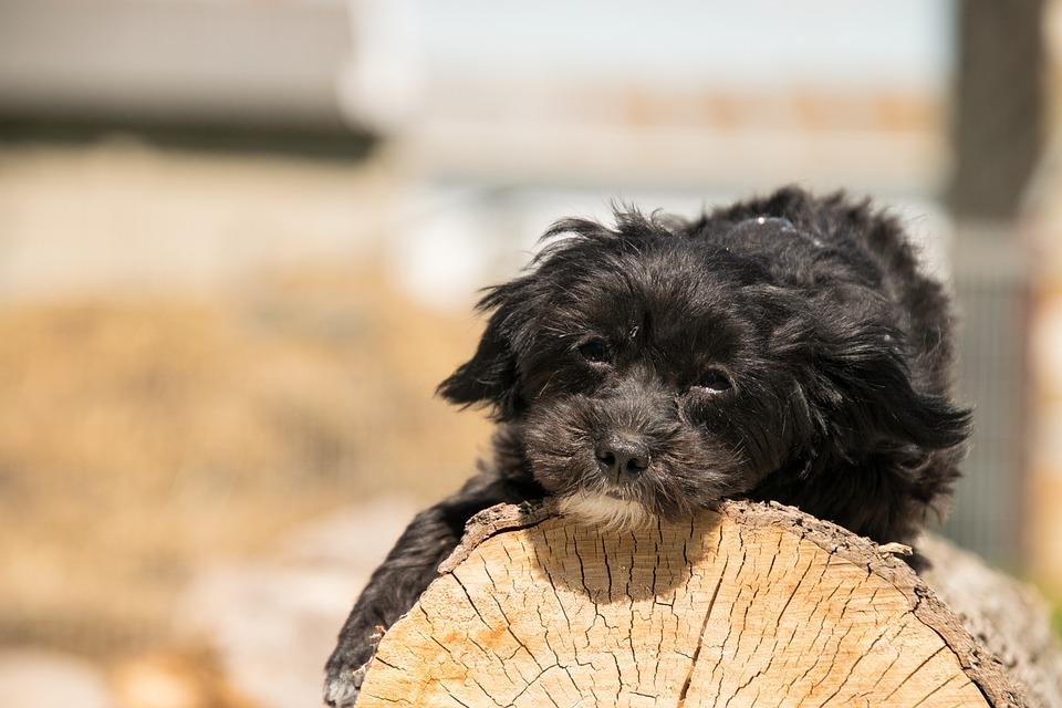 Animal, Dog, Cute, Pet, Small, Wood, Tribe, Tree