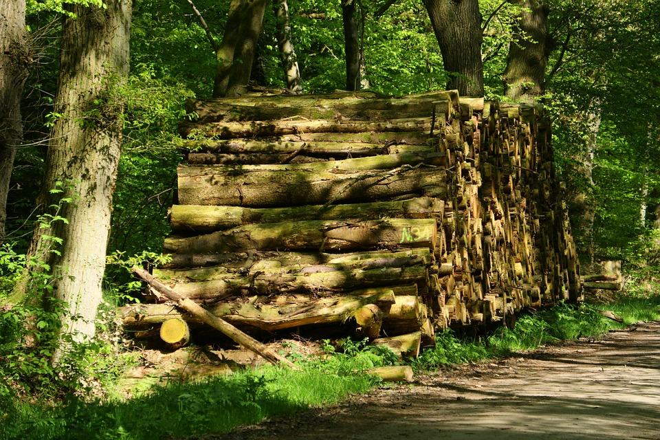 Wood, Nature, Tree, Wood Pile, Firewood, Holzstapel