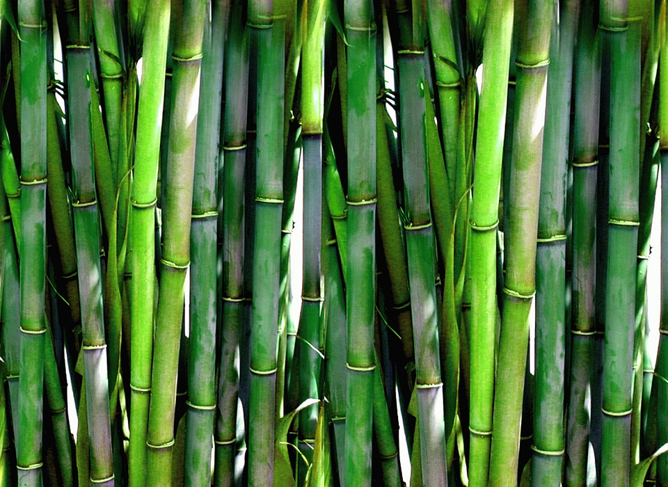 Bamboo, Forest, Green, Plant, Wood, Asia, Japanese