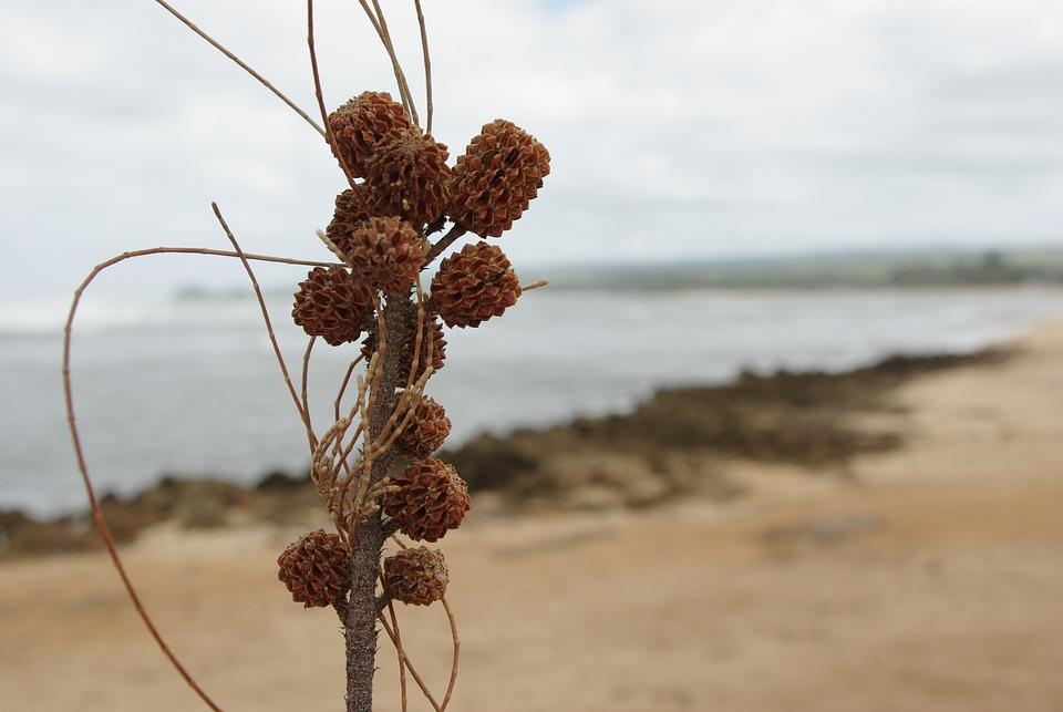 Hawaii, Wood, Natural, Plant, Scenery, Island
