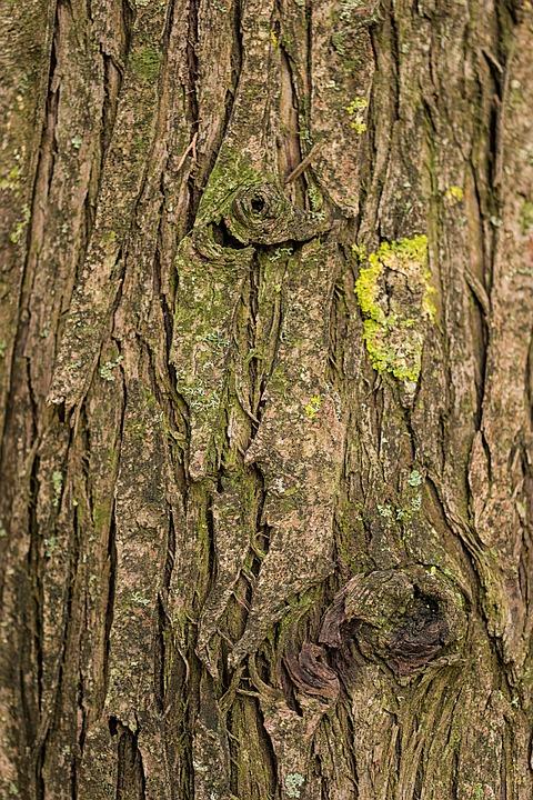 Wood Tree Nature Wallpaper Plant