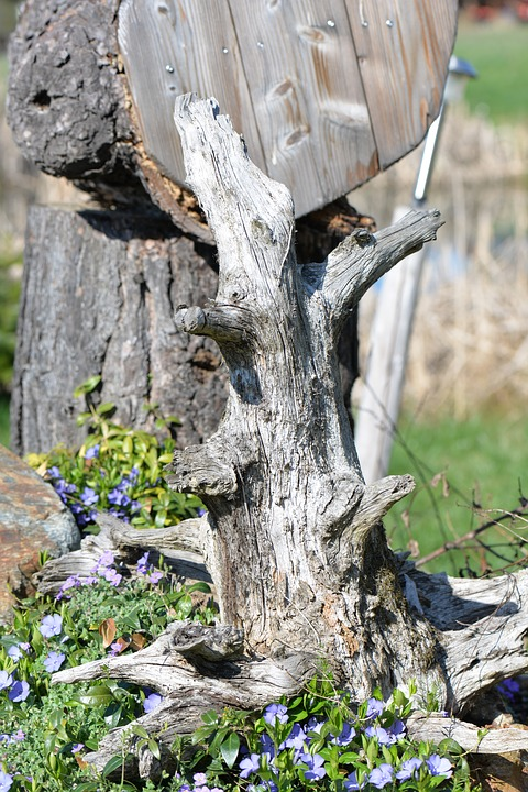 Root, Object, Nature, Wood