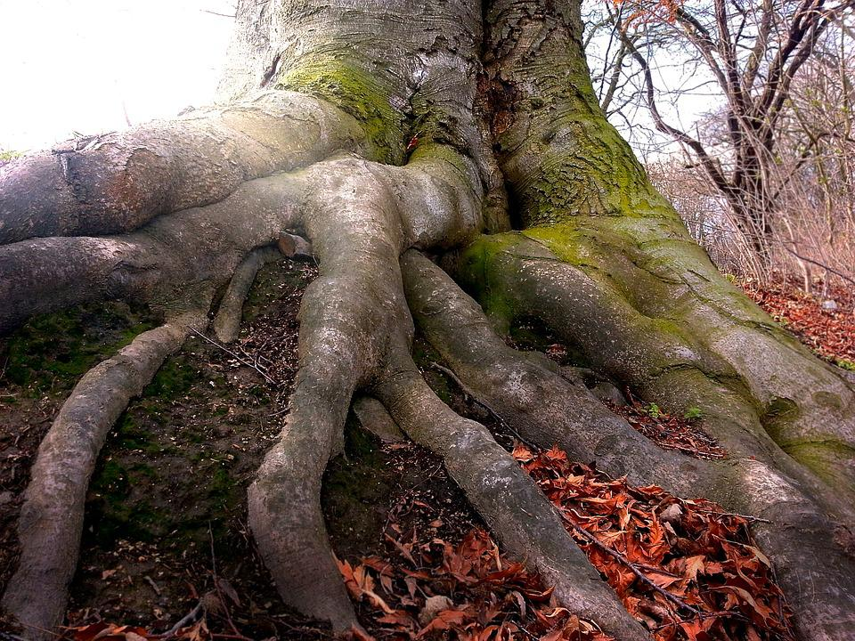 Root, Tree, Nature, Wood, Forest, Tree Root, Log