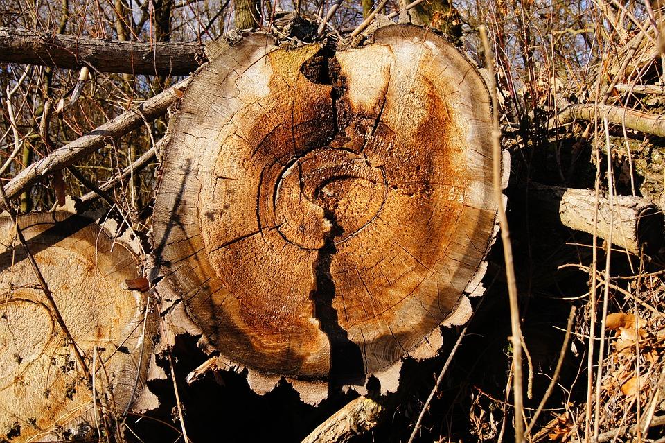 Annual Rings, Wood, Tree, Log, Sawed Off, Old, Like