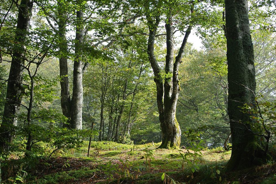 Forest, Wood, Black Forest, Schauinsland, Deciduous