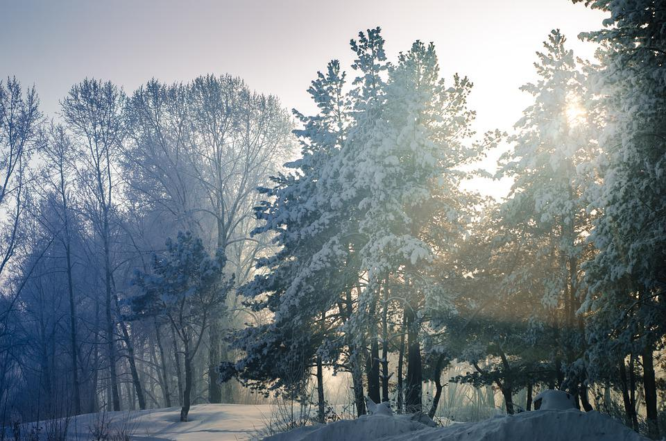Snow, Winter, Tree, Leann, Wood, Coldly, Frozen, Season